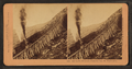 Day on the Mountain, Beautiful Day, Mt. Washington, by Kilburn Brothers 2.png