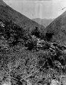De undersökta gravarna 7 och 8 i Quiaca. Lokal, Quiaca, Peru. Quiaca - SMVK - 002454.tif