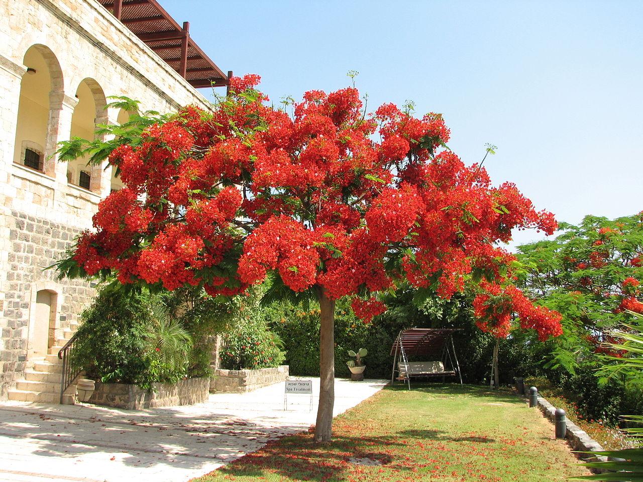 Royal Paradise Hotel And Spa Phuket