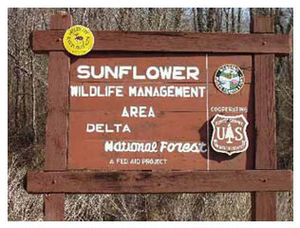 Delta National Forest - Image: Delta NF Sunflower WMA