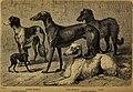 Der Hund und seine Racen. Naturgeschichte des zahmen Hundes, seiner Formen, Racen und Kreuzungen (1876) (20241413693).jpg
