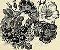 Descriptive catalogue of ornamental trees, shrubs, vines, evergreens, hardy plants and fruits (1896) (20354666598).jpg