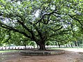 Dhaka University Campus, Dhaka, Bangladesh - panoramio (4).jpg