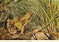 Die Reptilien und Amphibien mitteleuropas (1912) (20942486665).jpg