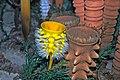 Diorama of a Carboniferous seafloor - Hydnoceras sponges 2 (30665031407).jpg