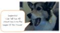 Dog Leadership.png