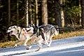 Dog Race 2 (251531705).jpeg