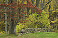Dogwood and Rock Wall (7366080102).jpg