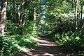 Downs Link near Rowly Farm - geograph.org.uk - 2052397.jpg