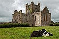 Dunbrody Abbey, Campile, Wexford (geograph 4572049).jpg