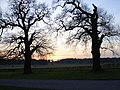 Dusk in Windsor Great Park - geograph.org.uk - 110922.jpg