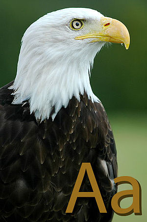 Eagle with letter A..jpg