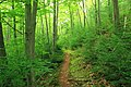 Early-Morning Hike (1) (14700182324).jpg
