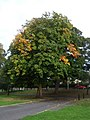 Early autumn foliage on The Green - geograph.org.uk - 1513751.jpg