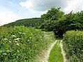 Edge of the woods - geograph.org.uk - 846906.jpg