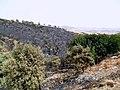 El Fernane - feux de forêts حرائق الغابات بالفرنان - panoramio (2).jpg