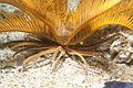 Elegant feather star9.jpg