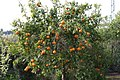 Eleouthkia Traditional and Botanical Park, Cyprus - panoramio (8).jpg