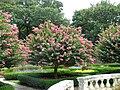 Elizabethan Gardens - sunken garden 03.jpg