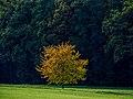 Eltmann Steigerwald Baum-20191020-RM-153314.jpg