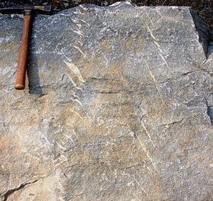 Echelon formation - Two parallel sets of en echelon veins in sandstone.