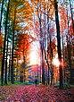 Enchanted colors - panoramio.jpg