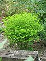 Euphorbia sp - Flickr - peganum.jpg