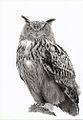 Eurasian eagle-owl (Bubo bubo) - Mikhailov Nikita.jpg