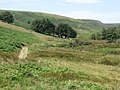 Exe Cleave - geograph.org.uk - 527477.jpg