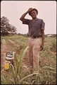 FARMER AND PESTICIDE SPRAY CAM - NARA - 544250.tif
