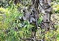FLora and fauna of Chinnar WLS Kerala (59).jpg