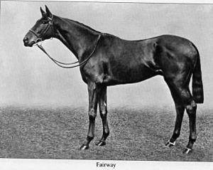 Fairway (horse) - Fairway circa 1929