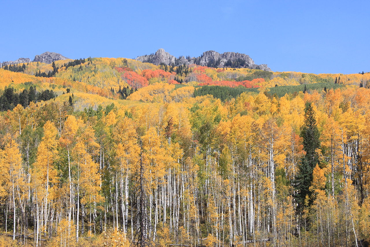 File Fall Colors At Kebler Pass Colorado Usa Jpg