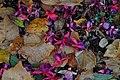 Fallen leaves and fallen flowers - 2020-10-08 - Andy Mabbett.jpg