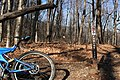 Farlow Gap Trailhead.jpg