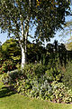 Feeringbury Manor birch and border, Feering Essex England.jpg