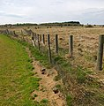 Fencing on Risby Warren - geograph.org.uk - 777770.jpg