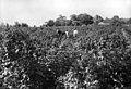 Field and lakeshore - 1908 (20853341754).jpg