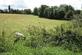 Field by Fieldgate Lane, Whitnash - geograph.org.uk - 1453743.jpg