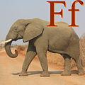 Fil için F.jpg
