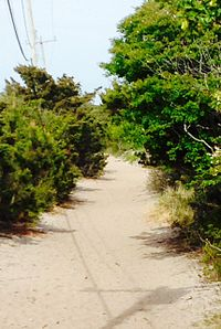 The Judy Garland Memorial Pathway More Commonly Referred To As Meat Rack Linking Together Communities Of Cherry Grove And Fire Island Pines