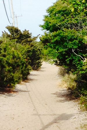 "Fire Island Pines, New York - The Judy Garland Memorial Pathway (more commonly referred to as ""the meat rack"") linking together the communities of Cherry Grove and Fire Island Pines."