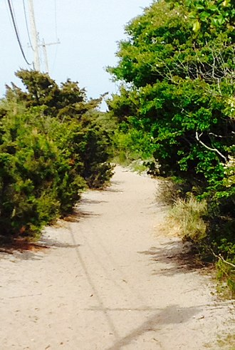 """Fire Island Pines, New York - The Judy Garland Memorial Pathway (more commonly referred to as """"the meat rack"""") linking together the communities of Cherry Grove and Fire Island Pines."""