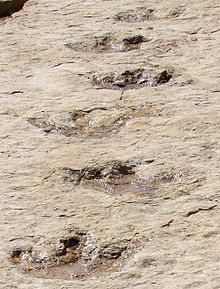 First Dinosaur Tracks from the Arabian Peninsula.jpg