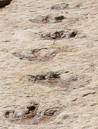 Trackway - Image: First Dinosaur Tracks from the Arabian Peninsula