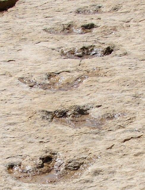 First Dinosaur Tracks from the Arabian Peninsula