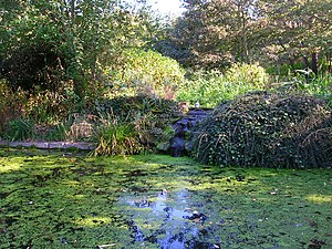 St. Ann's Well Gardens, Hove - The park's fish pond, October 2007