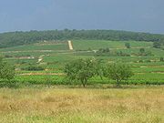180px-Fixin_Bourgogne_Vineyards1