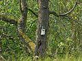 Fledermauskasten in Schlebusch.jpg