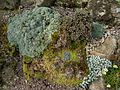 Flickr - brewbooks - Lichen and Plants on a rock (1).jpg